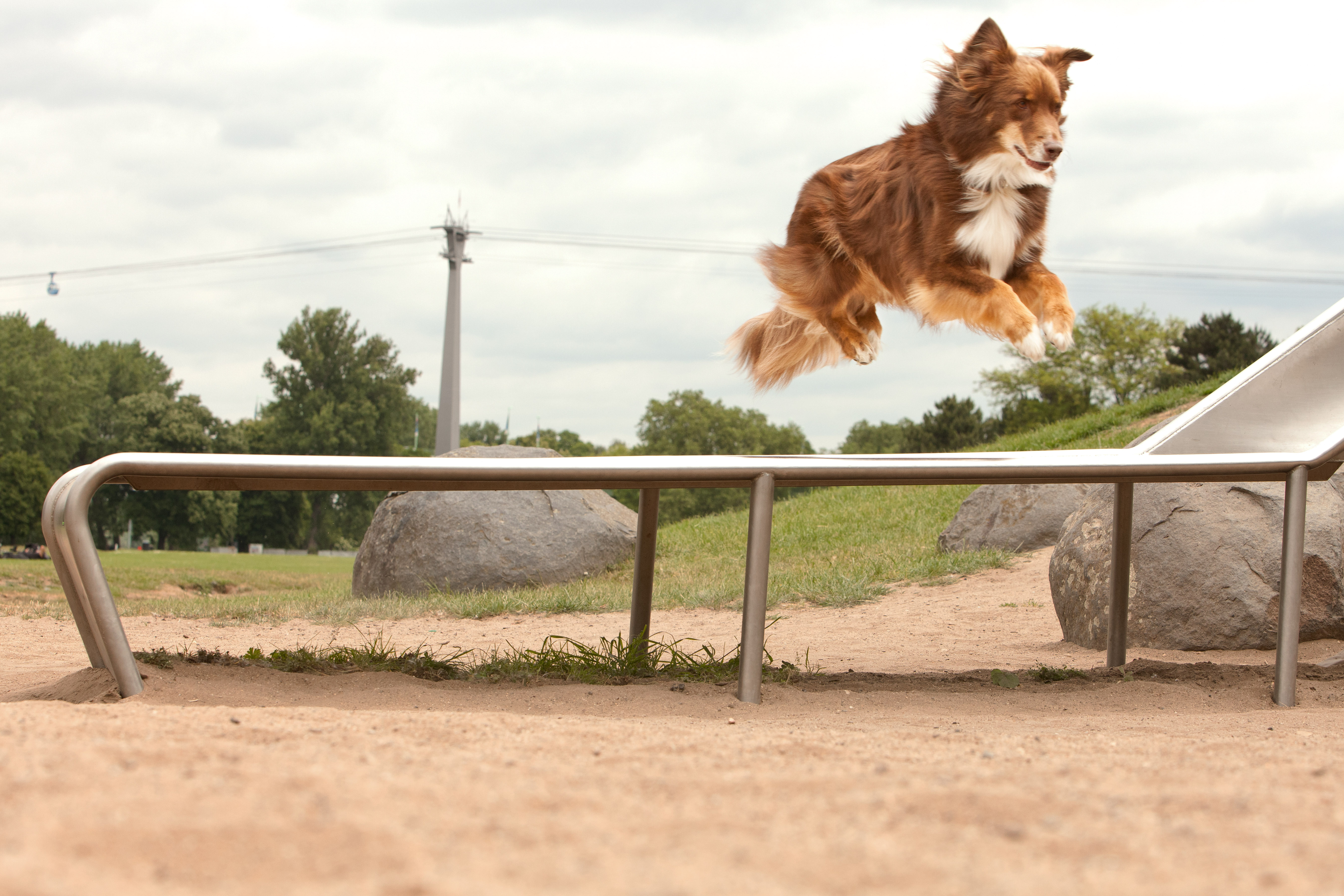 dog jumping a fence