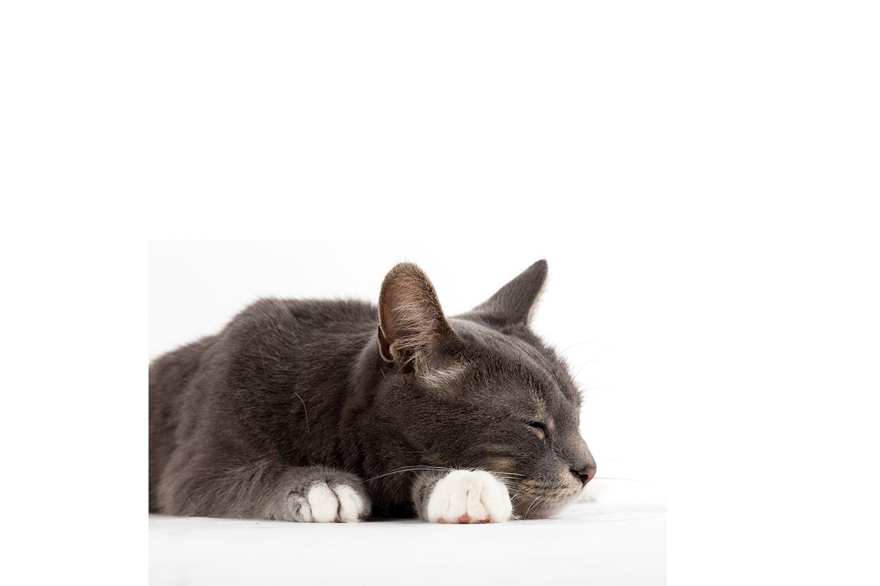 Beaphar Behavior And Calming Range For Cats