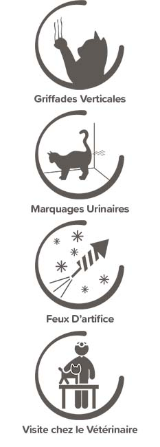 manifestations du stress du chat