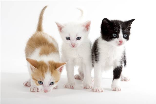 Groupe chatons