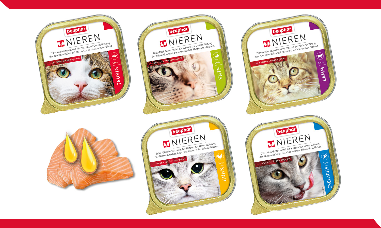 Wunderbar Katze Niere Anatomie Ideen - Menschliche Anatomie Bilder ...