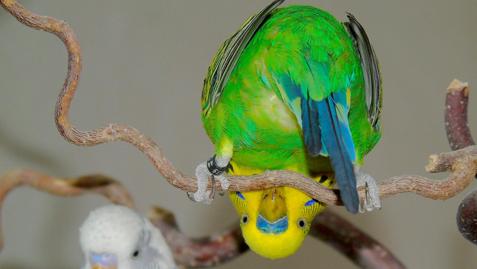 milben bei vögel bekämpfen