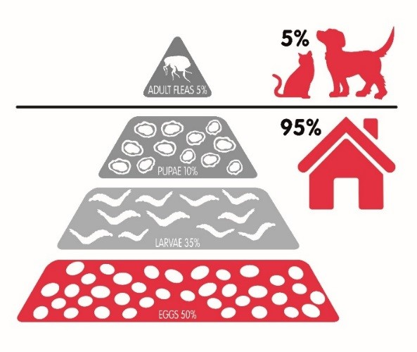 95% of a flea infestation is in your home only 5% is on your pet
