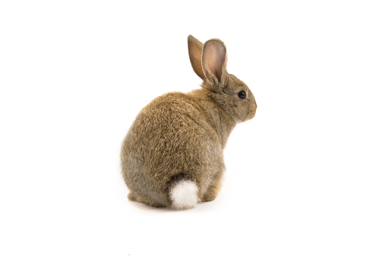 Rabbit Ear Dog Treats